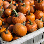 Sugar Pumpkins for sale at a farm stand.